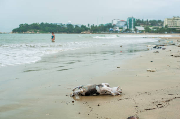 Drowned dead dog after the storm Drowned dead dog after the storm washed ashore suffragist stock pictures, royalty-free photos & images