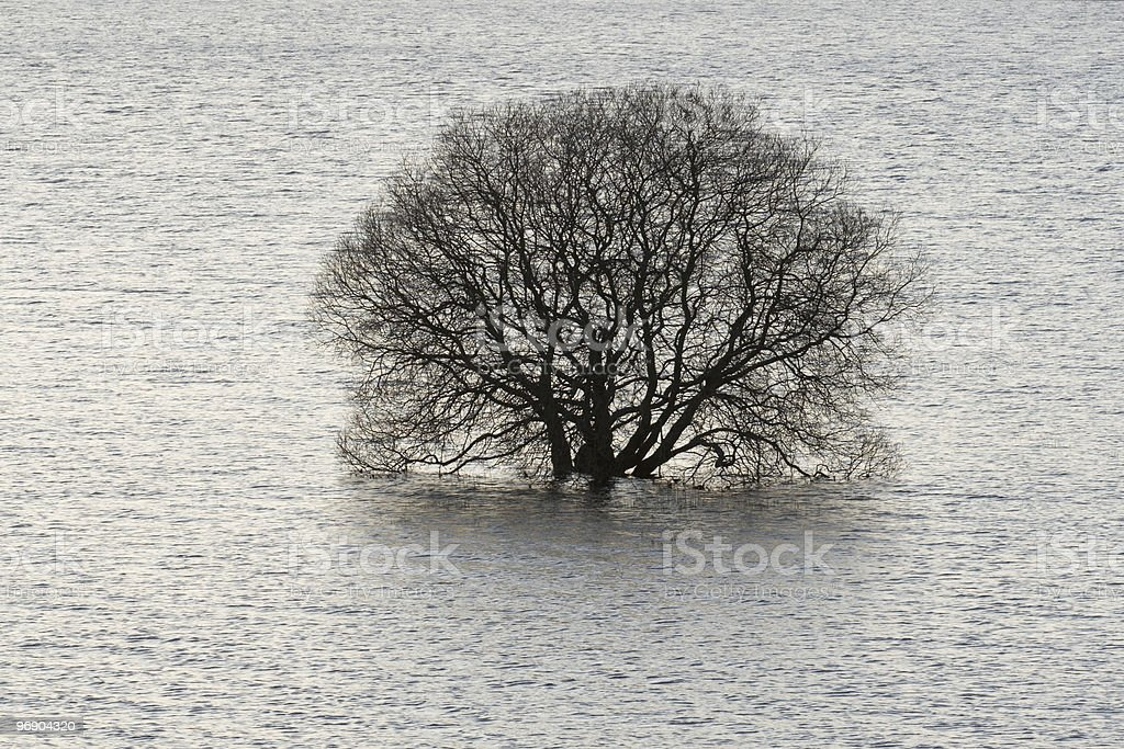 drowned tree royalty-free stock photo