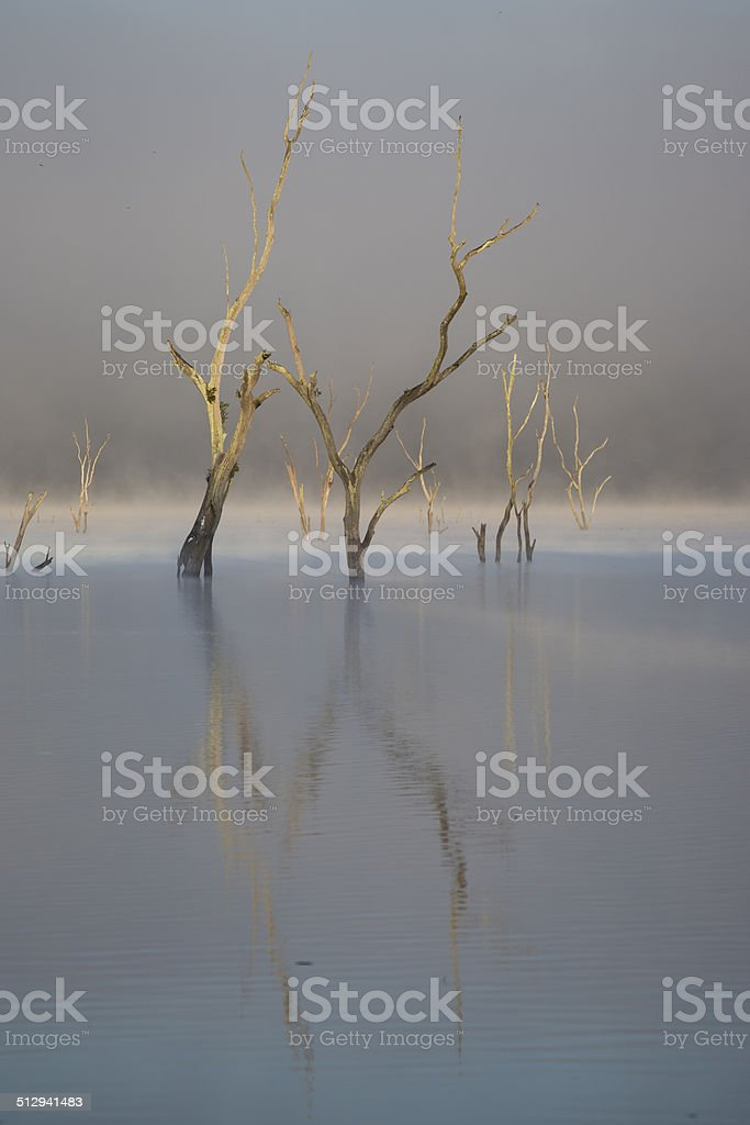 Drowned Trees stock photo