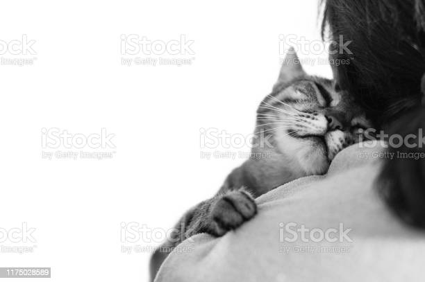 Drowsy sleeping cute cat on a shoulder black and white picture id1175028589?b=1&k=6&m=1175028589&s=612x612&h=xmv4wfzunxwyx99sgpctosofwahmvakehnby6706zpq=