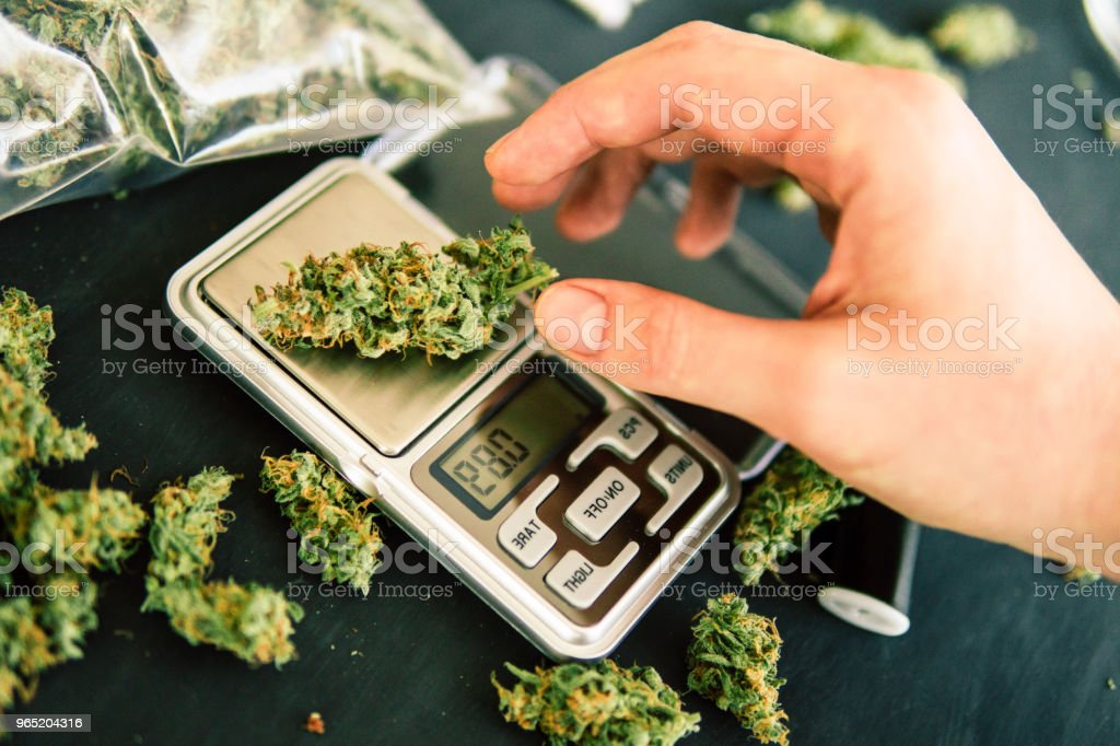 A drug dealer weighs cannabis flower marijuana on a scales concept of legalizing herbs weed zbiór zdjęć royalty-free