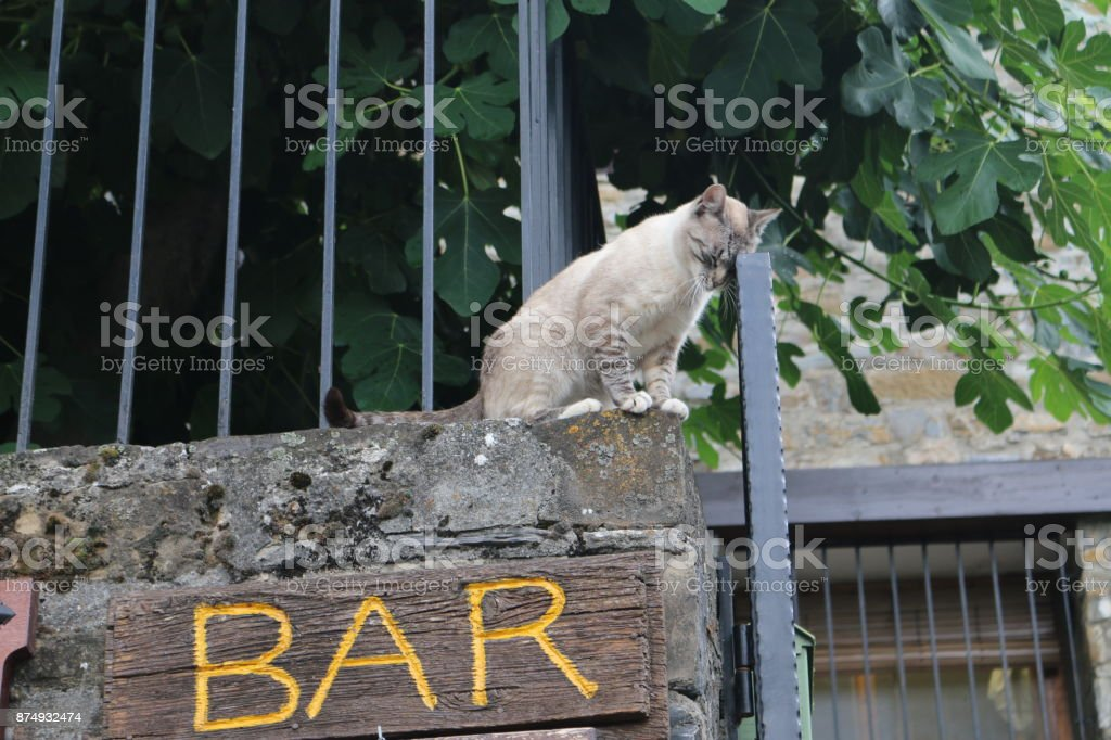 Drunk cat stock photo