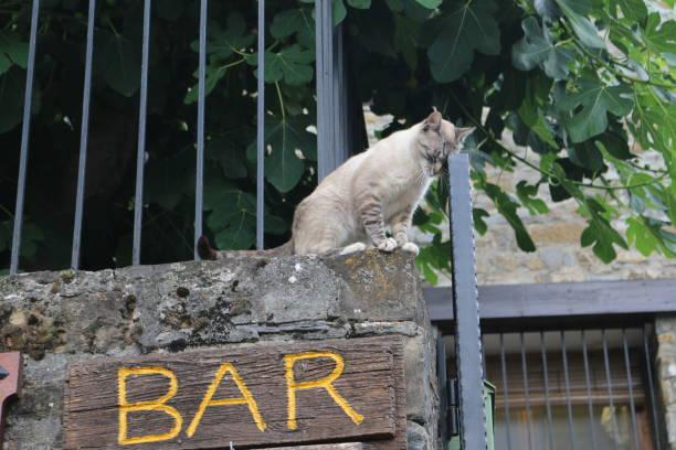 Drunk cat - fotografia de stock