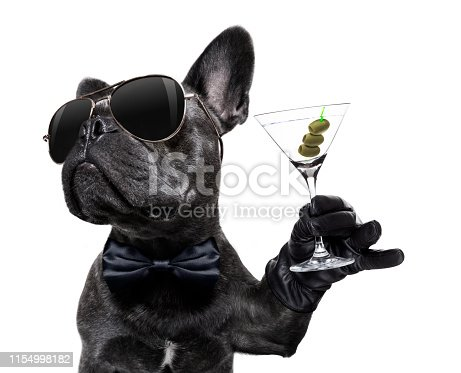 cool drunk french bulldog  dog cheering a toast with martini cocktail drink , looking up to owner ,   isolated on white background