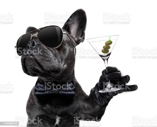 Drunk dog drinking a cocktail picture id1154998182?b=1&k=6&m=1154998182&s=612x612&h=xrfkph 9n89zfcwjsdtett3xaugtpwom8mmquc2blri=