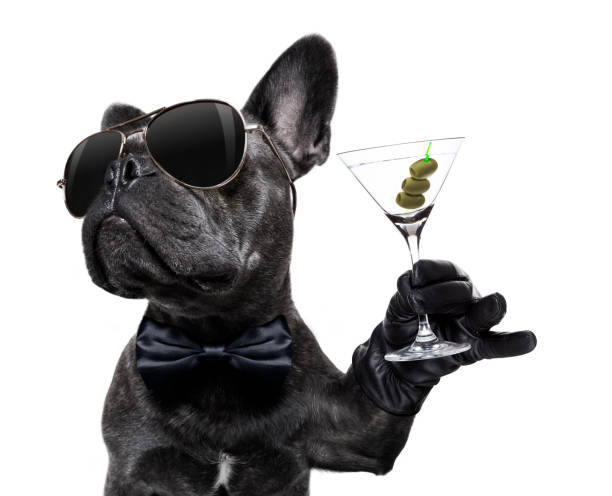 drunk dog drinking a cocktail cool drunk french bulldog  dog cheering a toast with martini cocktail drink , looking up to owner ,   isolated on white background martini stock pictures, royalty-free photos & images