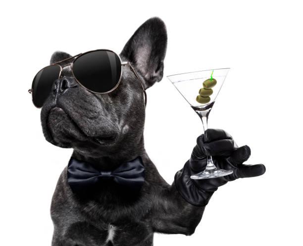 dronken hond drinken van een cocktail - happy hour stockfoto's en -beelden