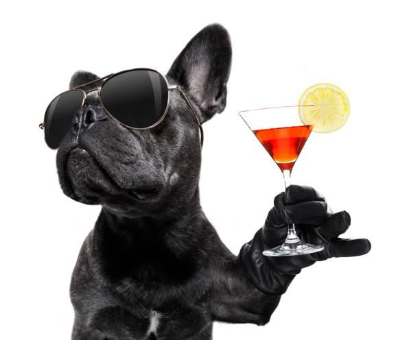 Betrunkener Hund trinkt einen Cocktail – Foto