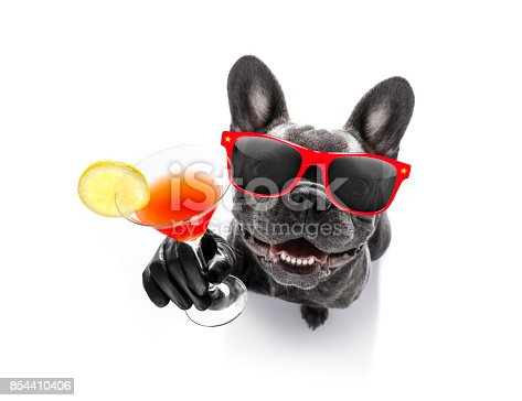 istock drunk dog drinking a cocktail 854410406