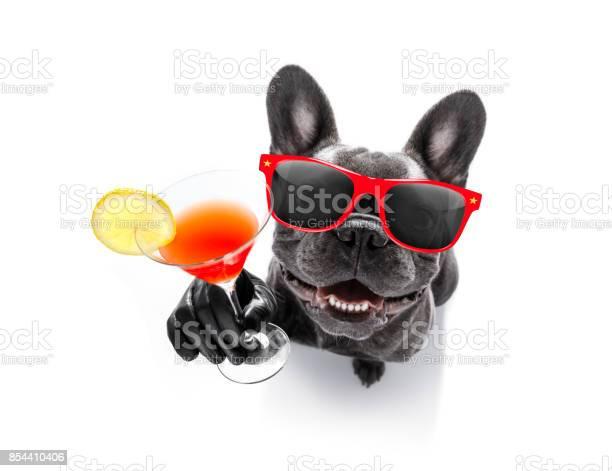 Drunk dog drinking a cocktail picture id854410406?b=1&k=6&m=854410406&s=612x612&h=uqmq 08pbxvdpun3wg8hooczxn0mkd0txtcj9rlkpdm=
