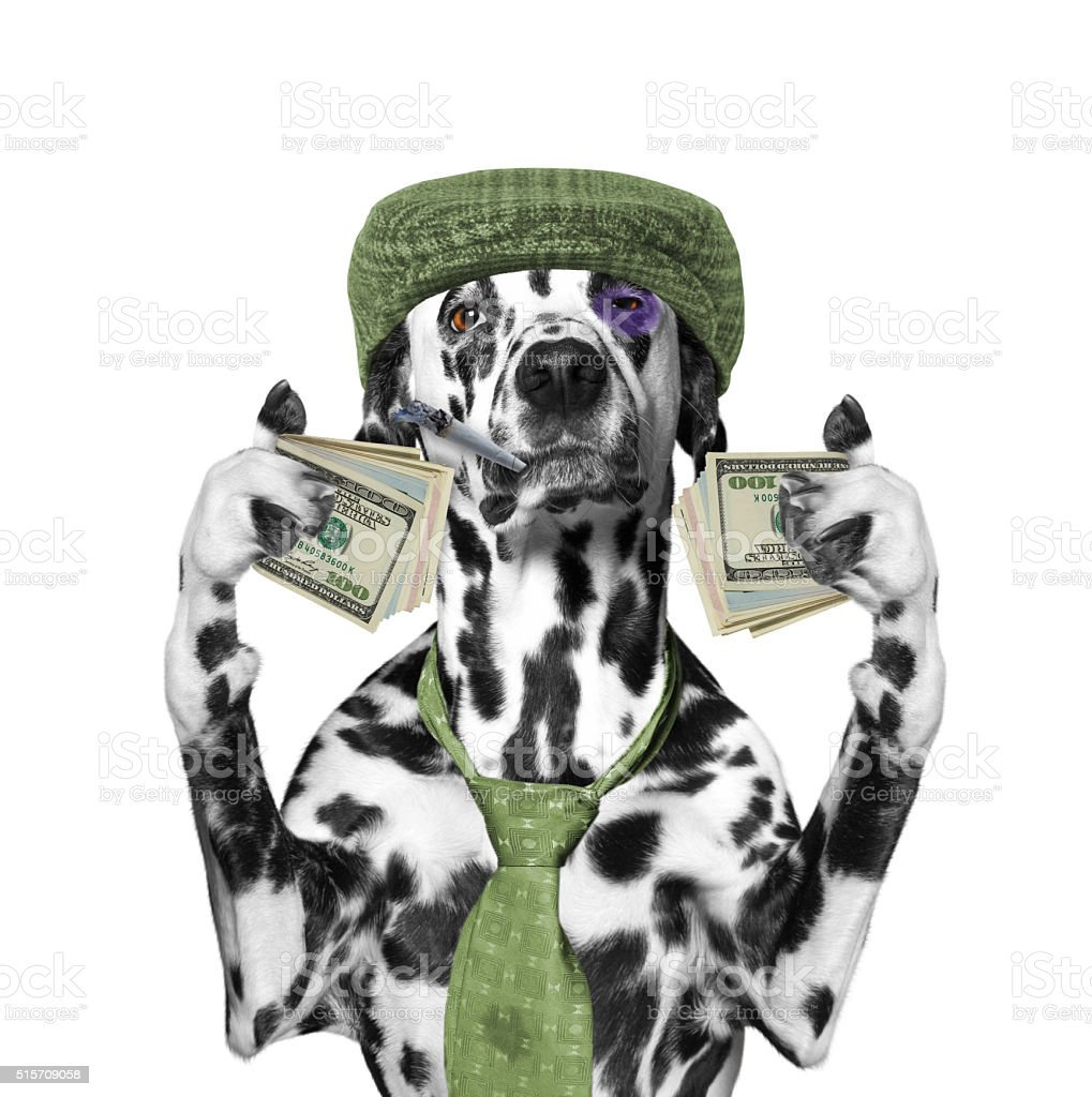 drunk dog holds a lot of money in the paws stock photo