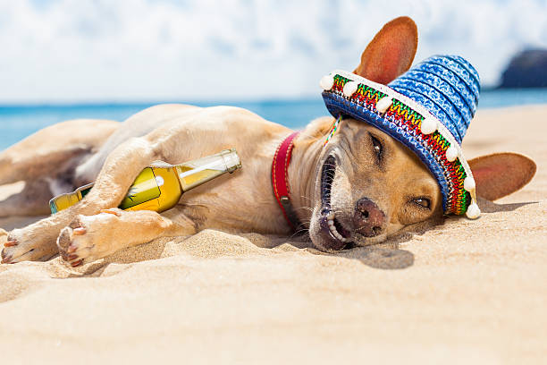 Best Mexican Fiesta Stock Photos, Pictures & Royalty-Free ...