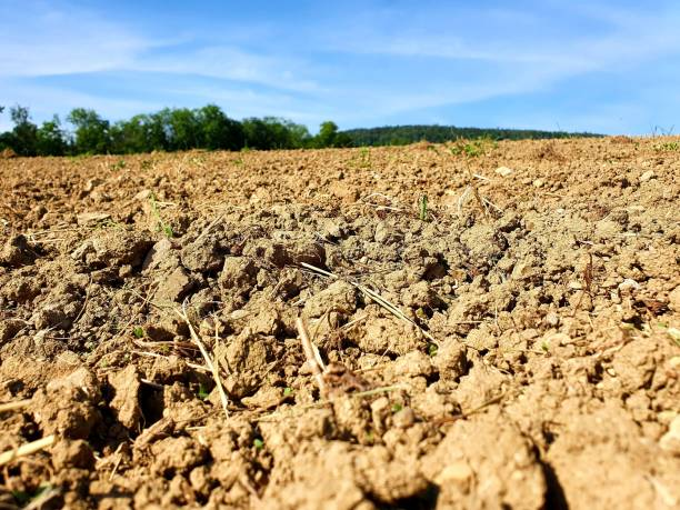 Dry agricultural field stock photo