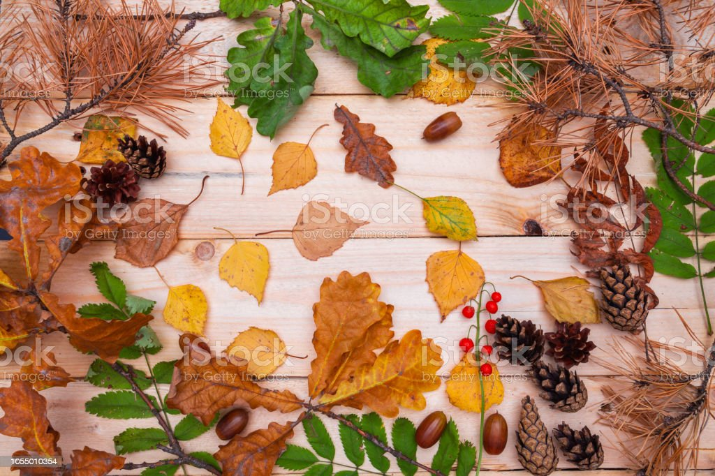 Dry and fresh green leaf frame on wooden background. Autumn seasonal...