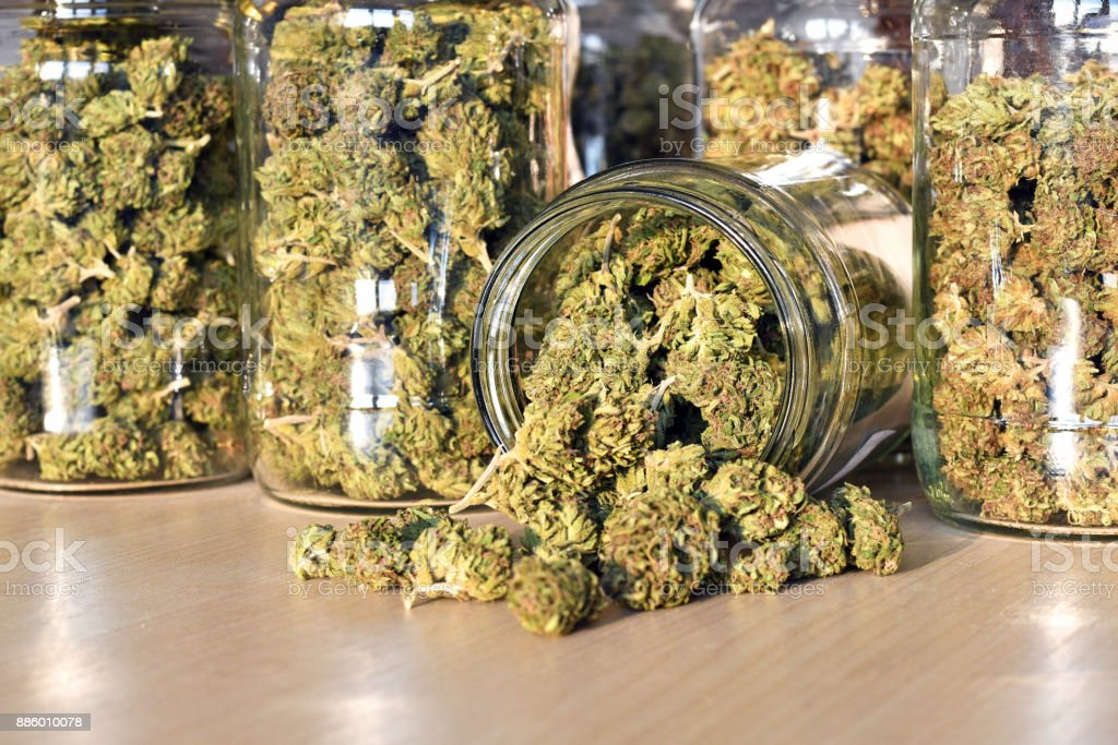 Dry and trimmed cannabis buds, stored in a glass jars royalty-free stock photo