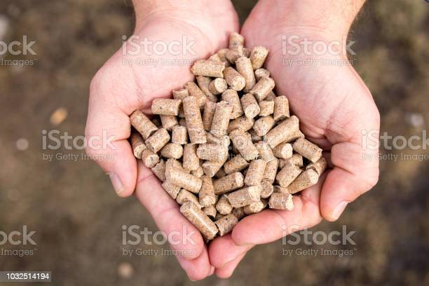 Dry animal feed in the hands of a farmer picture id1032514194?b=1&k=6&m=1032514194&s=612x612&h=kkdx1qzl3yq6nkoukmm3tfol2o6tuuqctyketob5zs0=