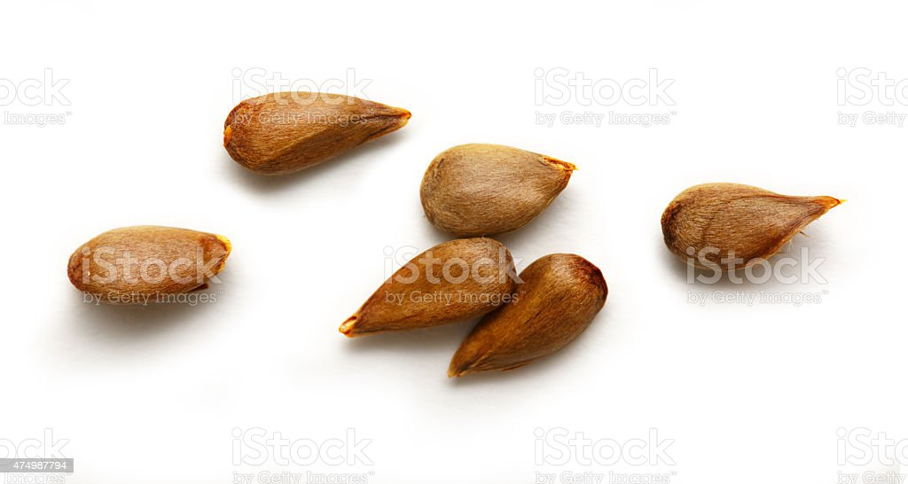 Dry apple seeds stock photo