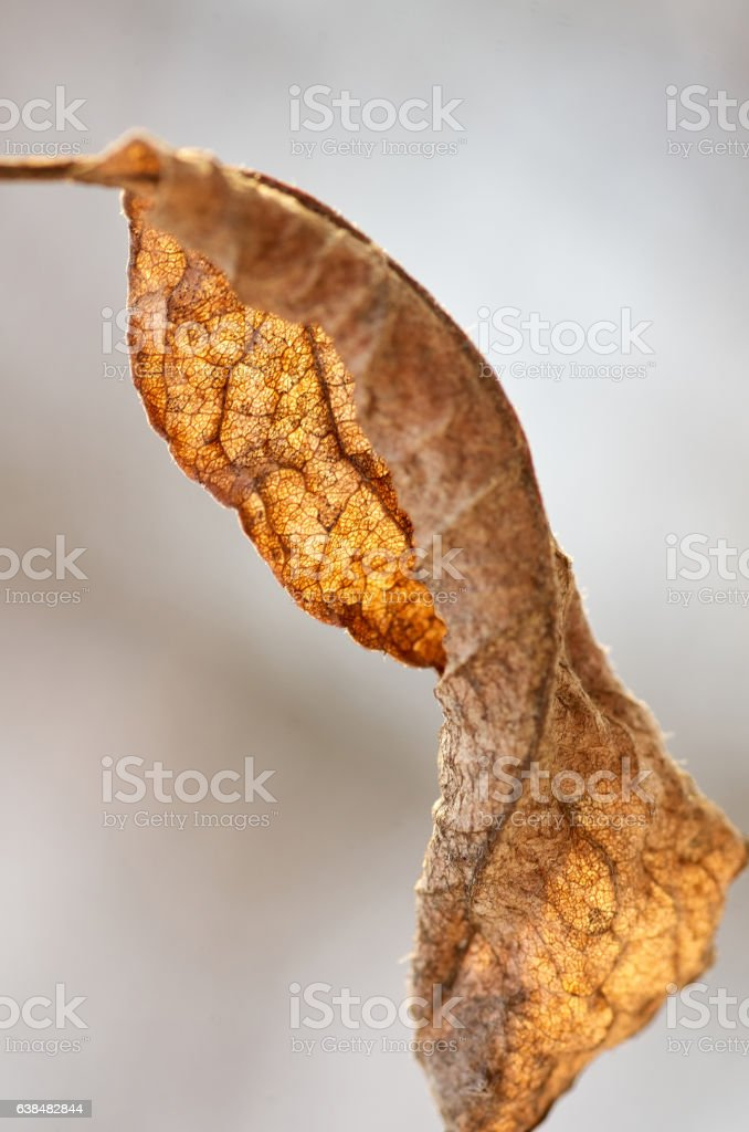 Dry autumn leaf on a tree brunch stock photo