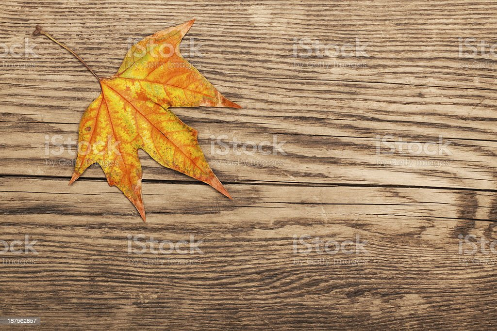 Dry autumn leaf on old plank royalty-free stock photo