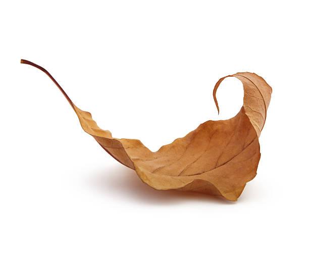 outono folha seca - planta morta imagens e fotografias de stock