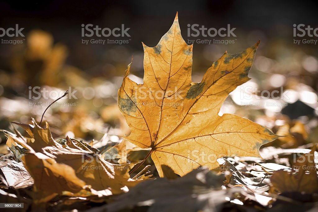 dry autumn leaves royalty-free stock photo