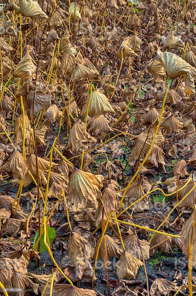 Dry autumn plants foto stock royalty-free