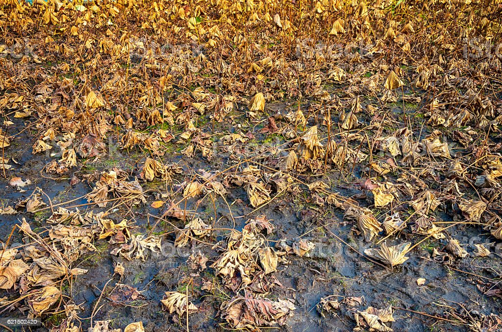 Dry autumn plants Lizenzfreies stock-foto