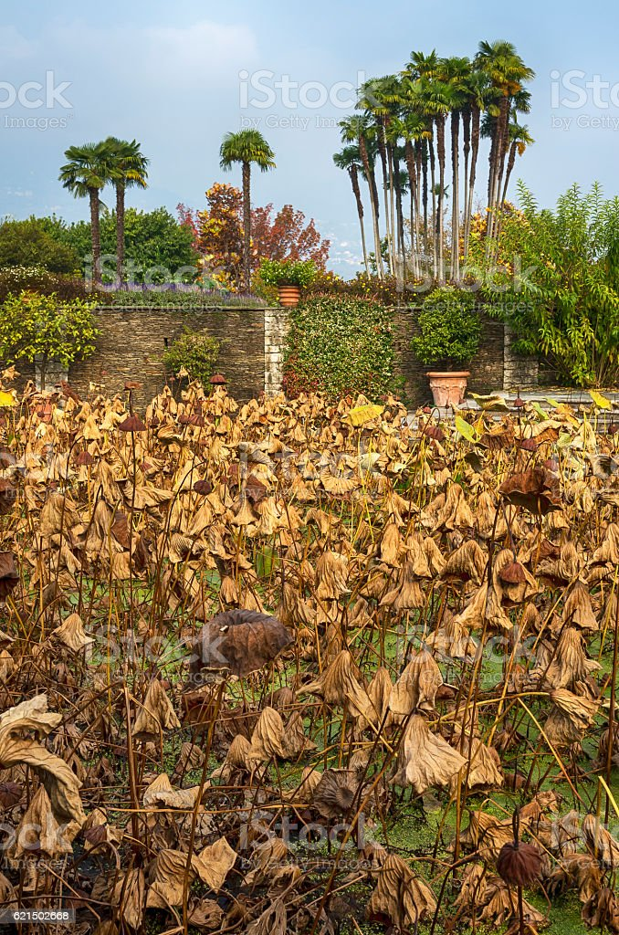 Dry autumn plants foto stock royalty-free