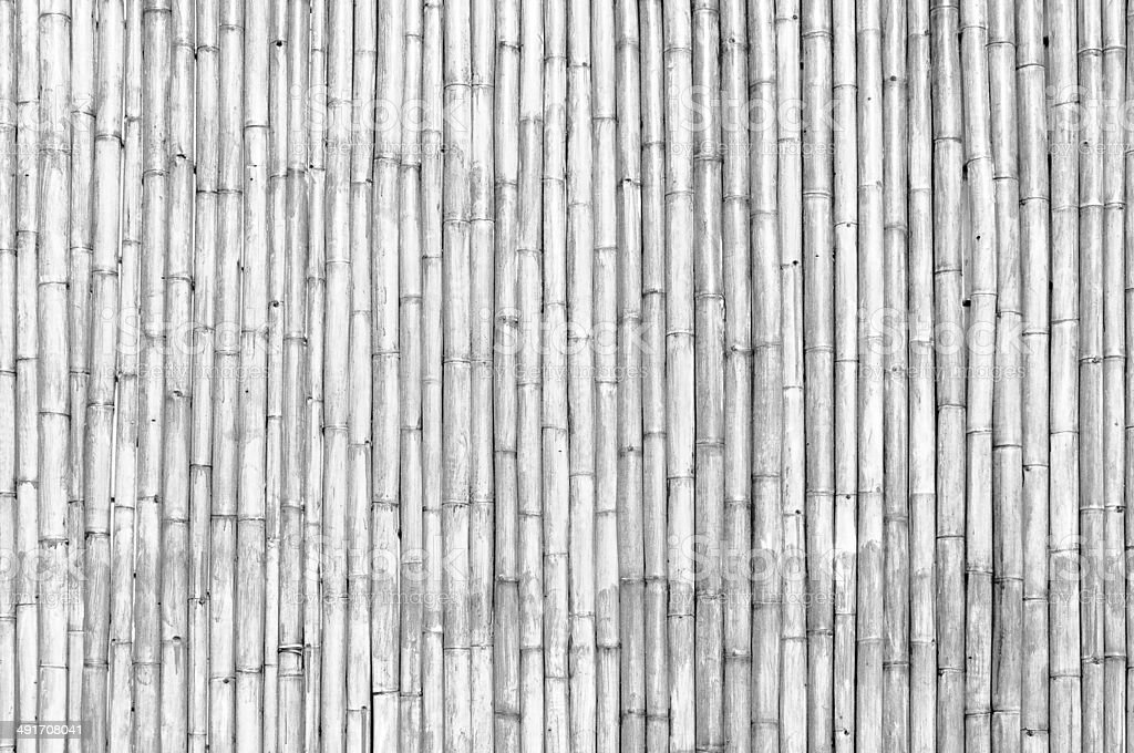 Dry bamboo stalk texture as a wall stock photo