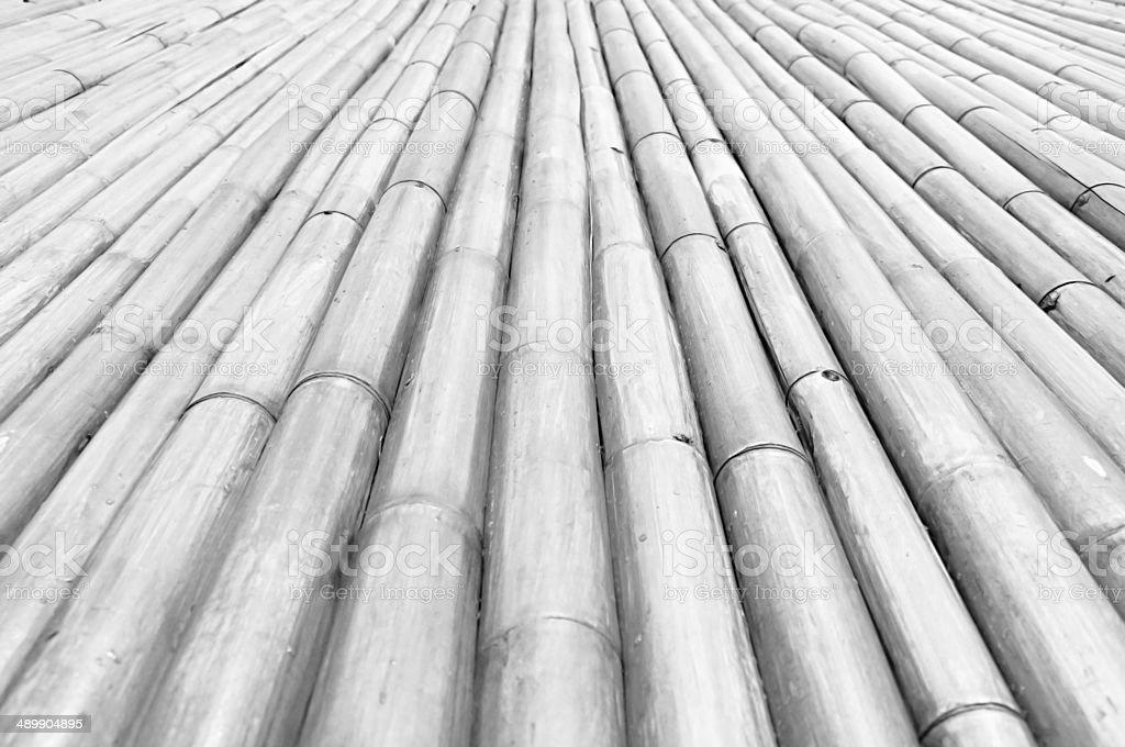 Dry bamboo stalks - monochrome - diminishing perspective stock photo