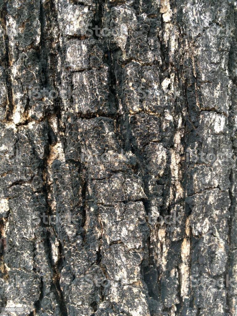torr bark tamarind tree textur - Royaltyfri Abstrakt Bildbanksbilder