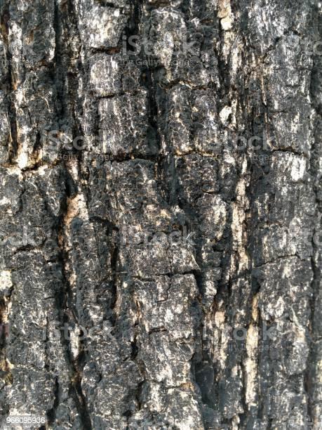 Torr Bark Tamarind Tree Textur-foton och fler bilder på Abstrakt