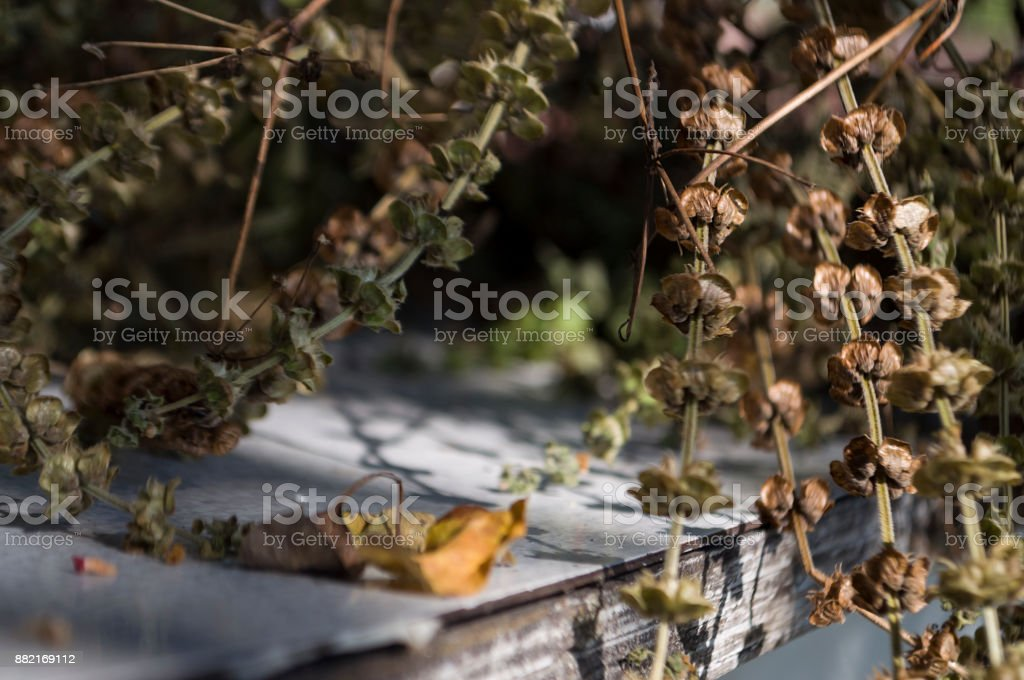 Dry basil herbs is laying on the table. Background in brown colors stock photo