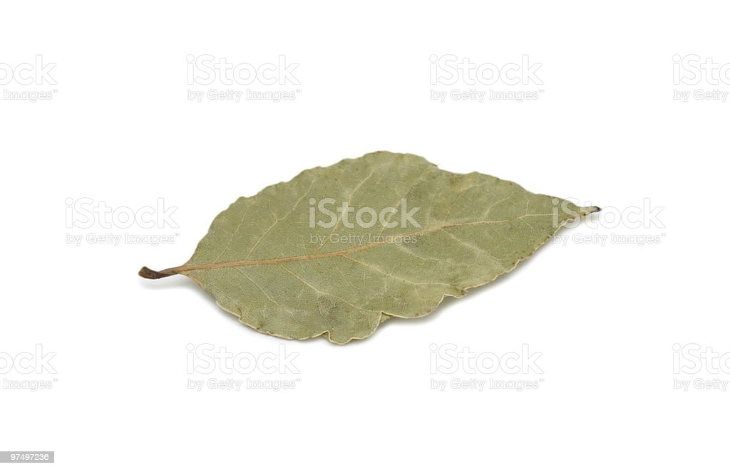 Dry bay leaf, isolated royalty-free stock photo