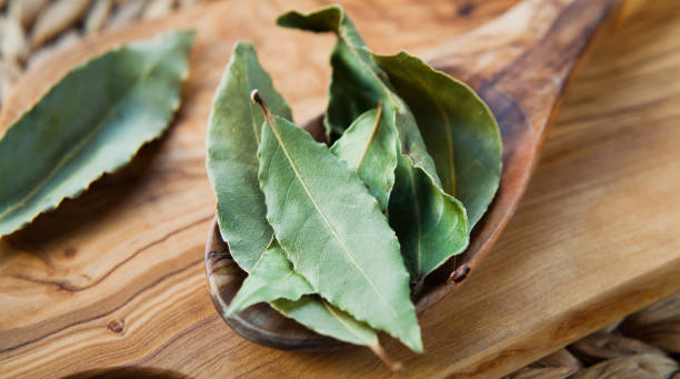 Dry Bay Leaves - Laurel aromatic Indian spices wooden spoon. stock photo