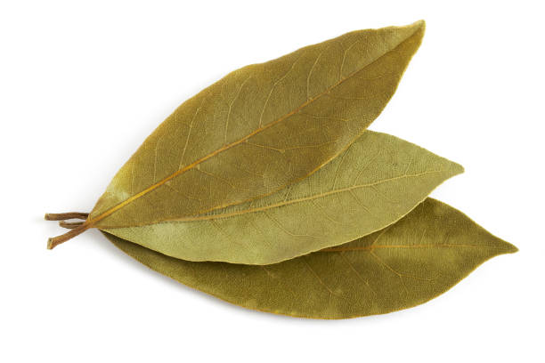 Dry bay leaves stock photo