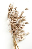 Dry beige grass on white background top view. Interior poster