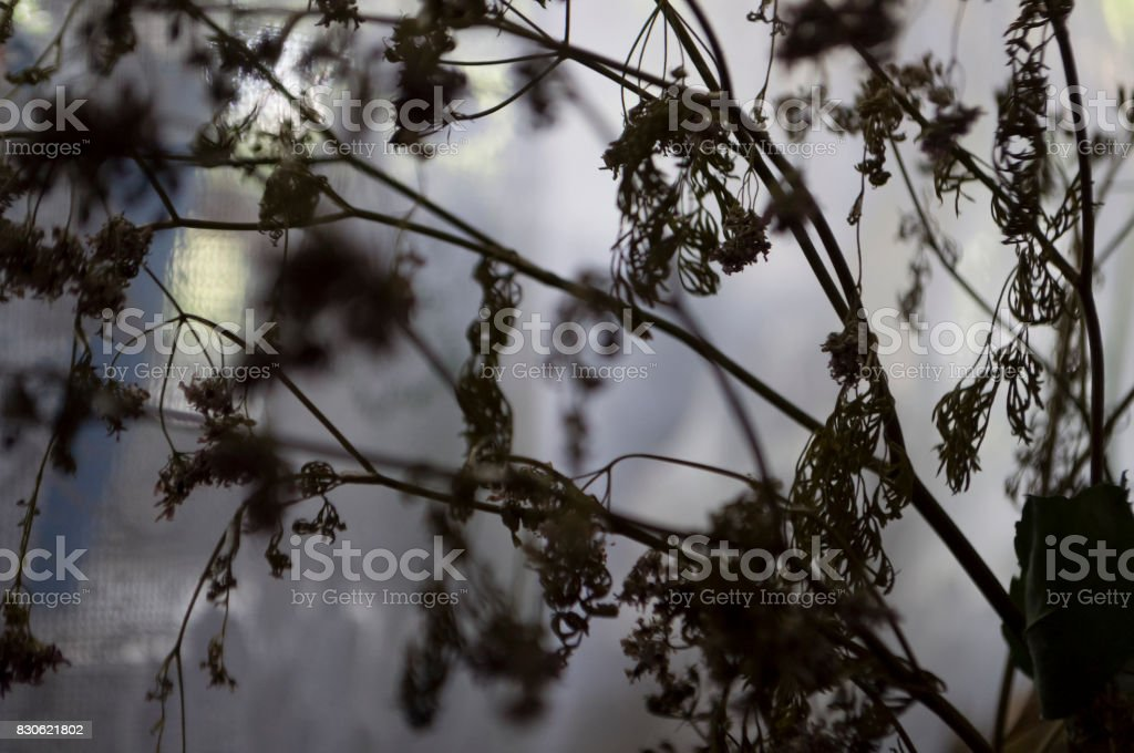 Dry black flowers with lace silhouettes. Simple still life stock photo