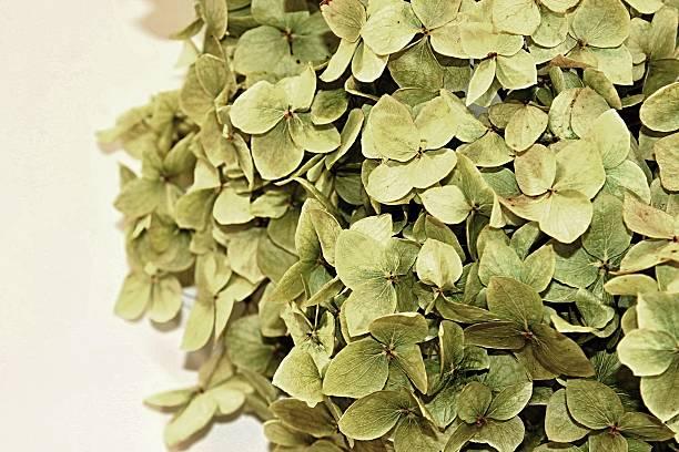 Dry bloosom stock photo