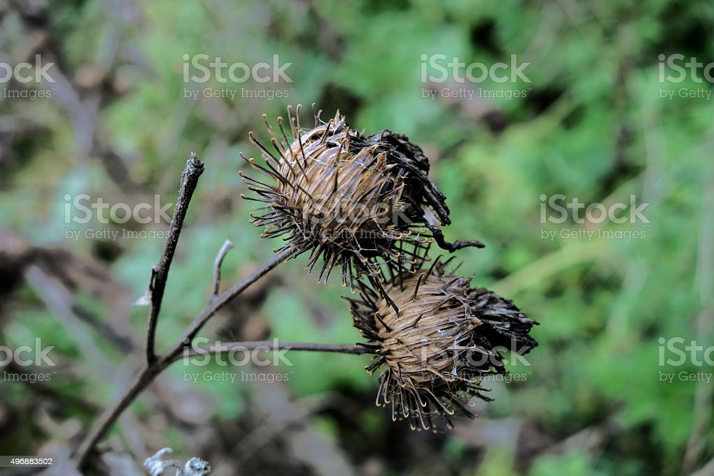 dry branch of flowers. close-up stock photo
