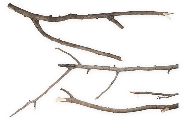 dry branch - branche partie photos et images de collection