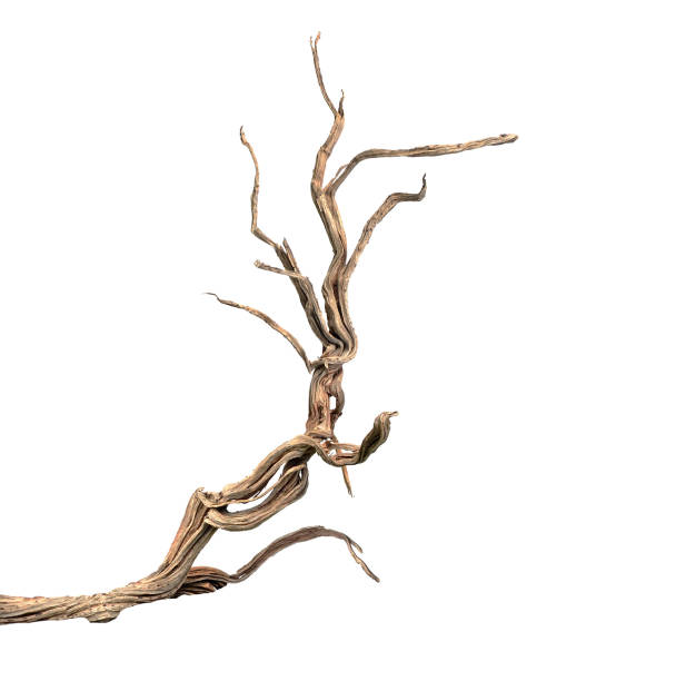 Dry branch Dry branch driftwood stock pictures, royalty-free photos & images
