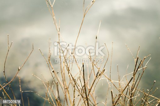 istock dry branches of a tree close-up background 587207678