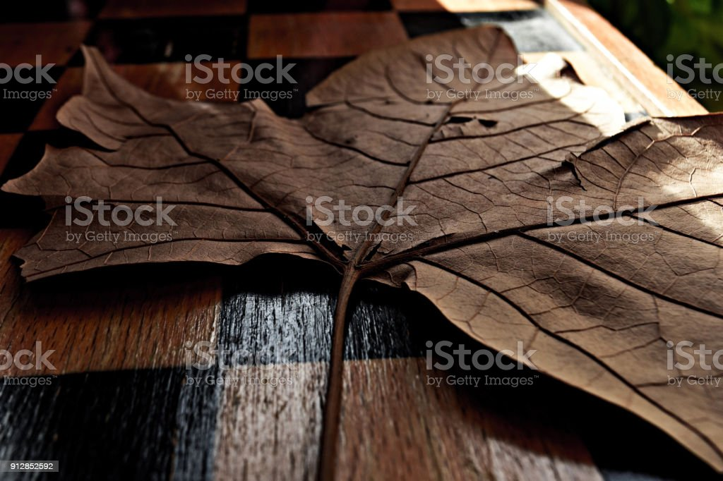 Dry brown autumn leaf at hardwood floor/ background stock photo