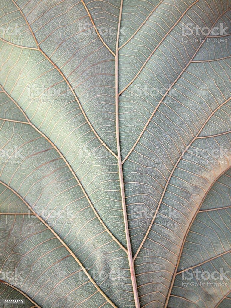 dry brown leaf texture - Zbiór zdjęć royalty-free (Biologia - Nauka)