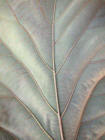 Dry Brown Leaf Texture - zdjęcia stockowe i więcej obrazów Biologia - Nauka