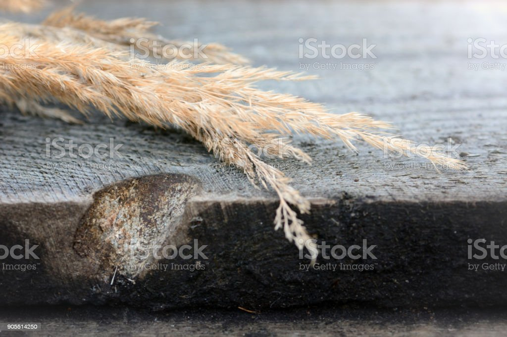 Dry calamagrotis on a table stock photo