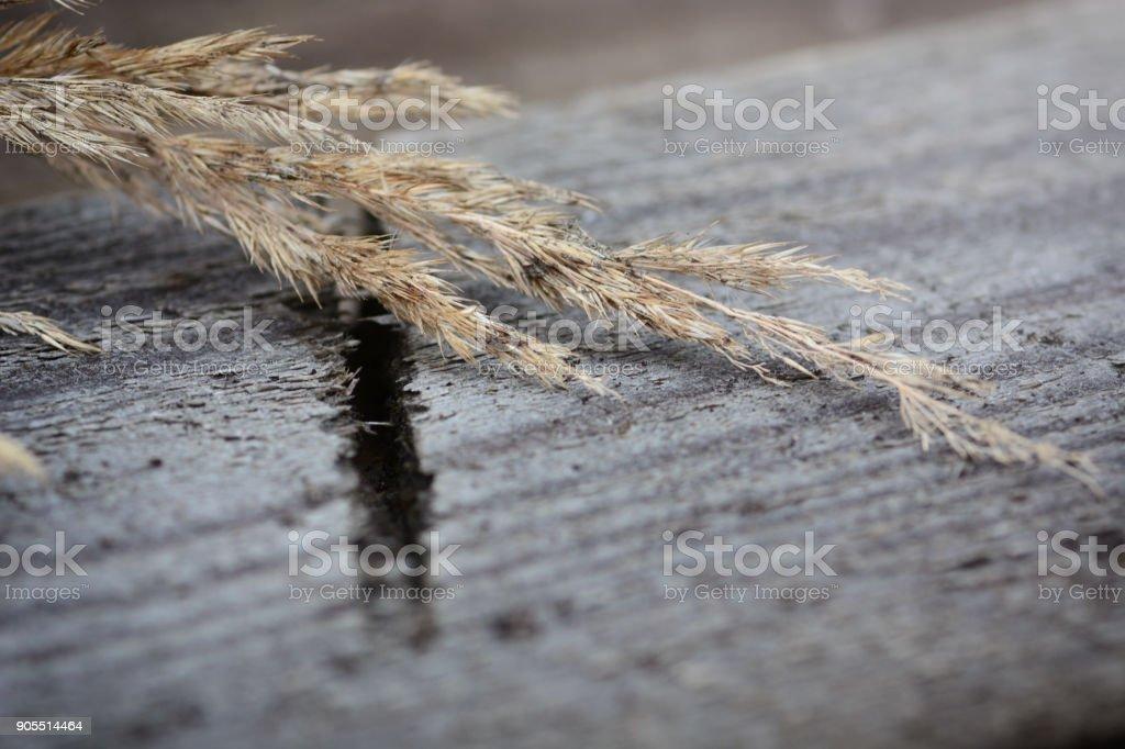 Dry calamagrotis still life stock photo