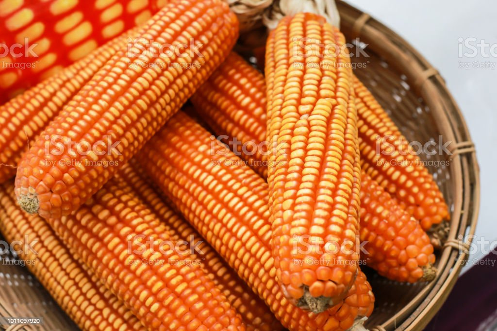Dry Corn Corn For Animal Feed Stock Photo - Download Image