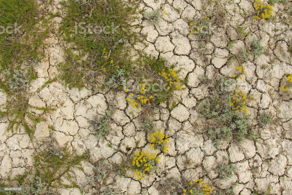Dry cracked earth background. Cracked mud pattern. Soil In cracks.Creviced texture.Drought land. Environment drought. Barren earth. royalty-free stock photo